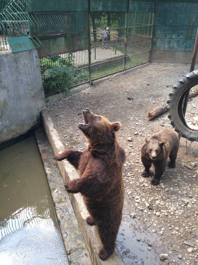 Plimbare de weekend: Grădina Zoologică din Târgu Mureș