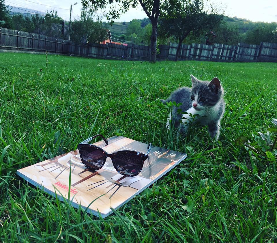 ochelari de soare Rayons