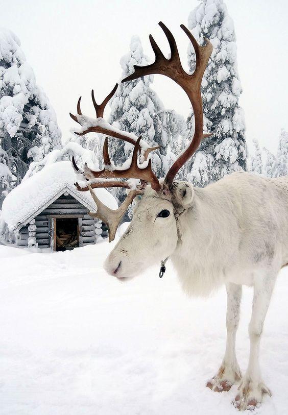 sejur Laponia