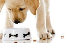 hrana pentru câini