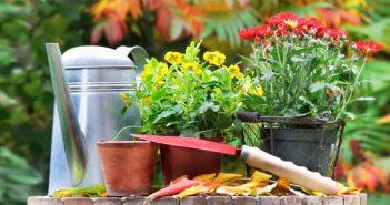Activități de toamnă în grădină mea