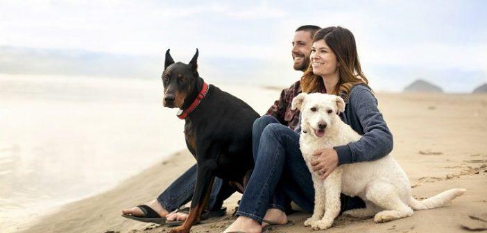 câine în viața ta