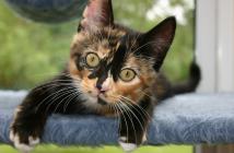 îngrijirea adecvată a pisicii