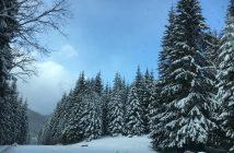 vizitează Bucovina